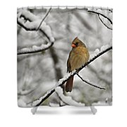 Cardinal Female 3652 Shower Curtain