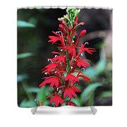 Cardinal Flower Shower Curtain