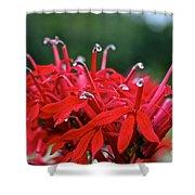 Cardinal Flower Close Up Shower Curtain