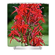 Cardinal Flower Full Bloom Shower Curtain