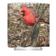 Cardinal In A Bush Shower Curtain