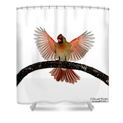 Cardinal Landing On Handle Shower Curtain