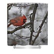 Cardinal Male 3666 Shower Curtain
