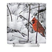Cardinal Male 3669 Shower Curtain