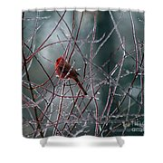 Cardinal On Ice Shower Curtain