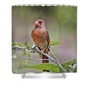 Cardinal On Pope Shower Curtain