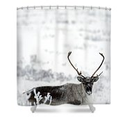 Caribou Rangifer Tarandus Dempster Shower Curtain