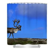 Caribou Walking On Hill Crest Shower Curtain