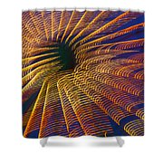 Carnival Abstract Lights Shower Curtain
