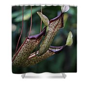 Carnivore Shower Curtain