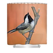 Carolina Chickadee - D007814 Shower Curtain