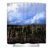 Carolina Sea Oats Shower Curtain