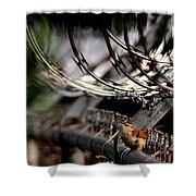 Carolina Wren - Secured Shower Curtain