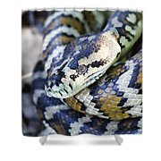 Carpet Python Shower Curtain