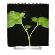 Castor Bean Plant Shower Curtain
