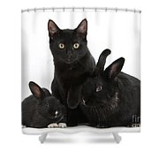 Cat And Rabbits Shower Curtain