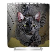 Cat Art Of Relaxing Shower Curtain