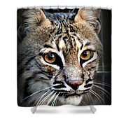 Cat Fever Shower Curtain