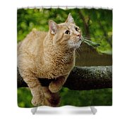 Cat Hanging On A Limb Shower Curtain