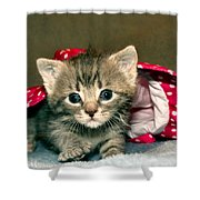 Cat In The Hat Shower Curtain