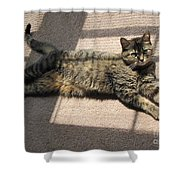 Cat Life Shower Curtain