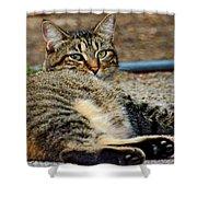 Cat Nap Interuption Shower Curtain