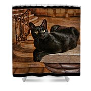 Cat On Pillar Shower Curtain