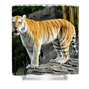 Cat On The Rocks Shower Curtain