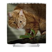 Cat Out On A Limb Shower Curtain
