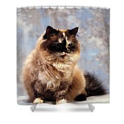 Cat Portrait Of A Cat Shower Curtain