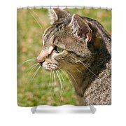 Cat Portrait On A Green Lawn Shower Curtain