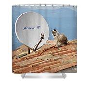 Cat Sat Shower Curtain