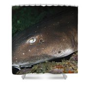 Cat Shark Sleeping, Pulau Tioman Shower Curtain