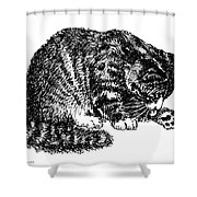 Cat-tabby-posters-1 Shower Curtain