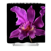 Catalea Orchid Shower Curtain