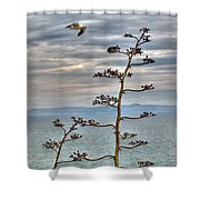 Catalina Gull And Channel Shower Curtain