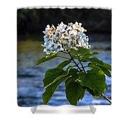 Catalpa Beauty Shower Curtain