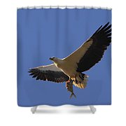 Catch Of The Day - White-bellied Sea-eagle Shower Curtain