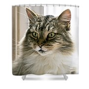 Cats Are Magical Shower Curtain