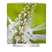 Cat'swhiskers Shower Curtain