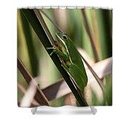 Cattail Kid Shower Curtain