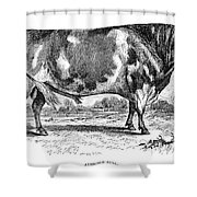 Cattle, 1867 Shower Curtain