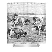 Cattle, 1888 Shower Curtain