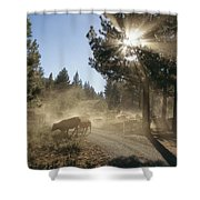 Cattle Cross A Gravel Road On A Fall Shower Curtain