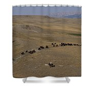 Cattle Drive In Montana Shower Curtain