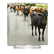 Cattle Drive On A Road  Shower Curtain