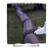 Cattle Egret Landing Shower Curtain