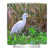Cattle Egret Shower Curtain