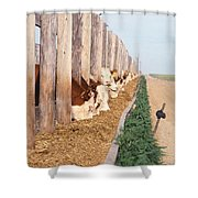 Cattle Feeding Shower Curtain