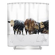 Cattle In A Snowstorm In Southwest Michigan Shower Curtain